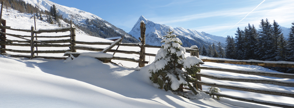 fence with snow